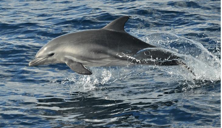 Híbrido Bahía de algeciras