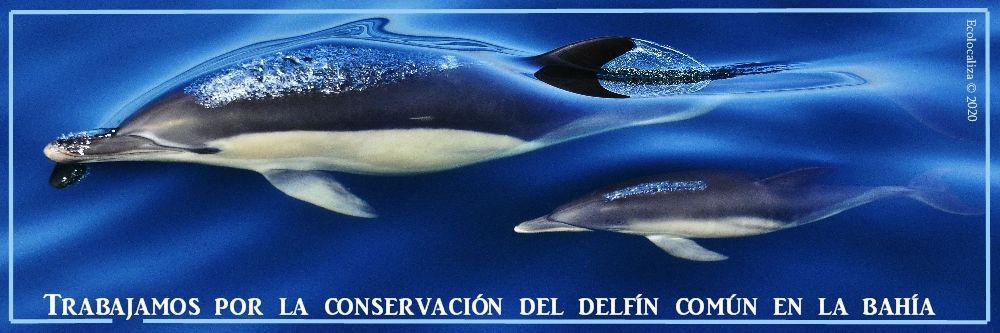 Ecolocaliza_trabaja_delfin_comun