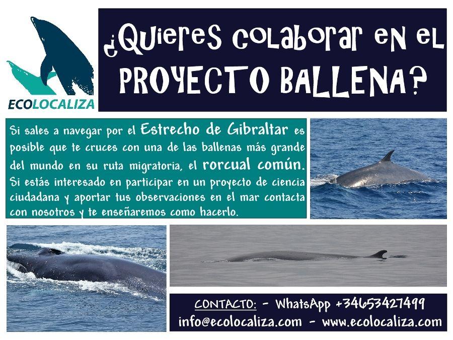 Proyecto_Ballena